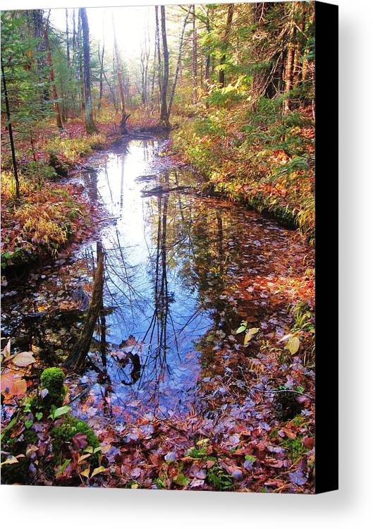 Woods Canvas Print featuring the photograph Wet Feet by Joe Martin