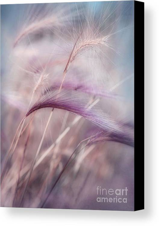 Barley Canvas Print featuring the photograph Whispers In The Wind by Priska Wettstein