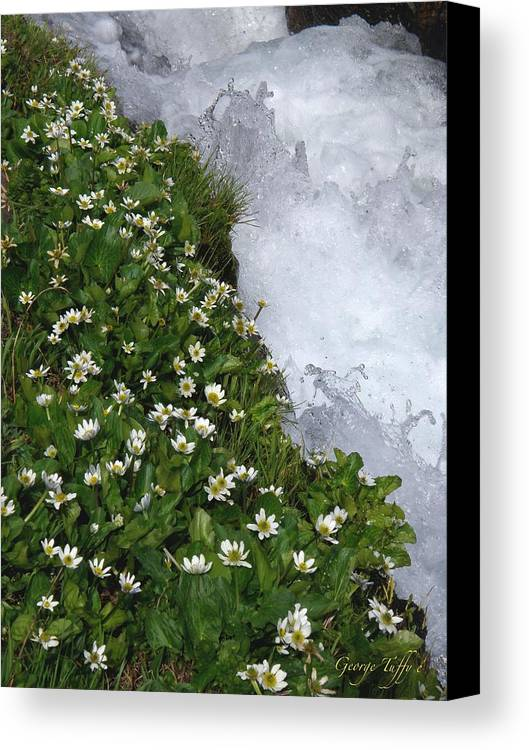 Wildflowers Water Mountain Stream Spring Colorado Rocky Mountains Spring Flowers Rapids White Water Canvas Print featuring the photograph White Flowers And Water by George Tuffy