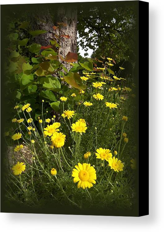 Flower Canvas Print featuring the photograph Wild Flowers by Jim Darnall
