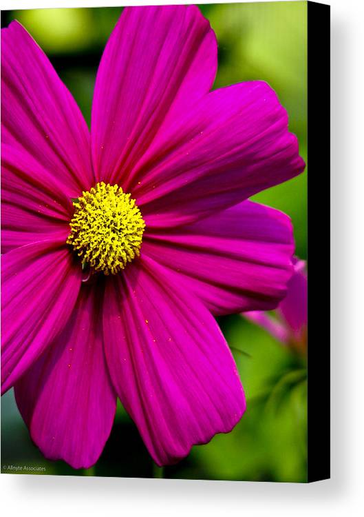 Flower Canvas Print featuring the photograph Yellow Center by Ches Black