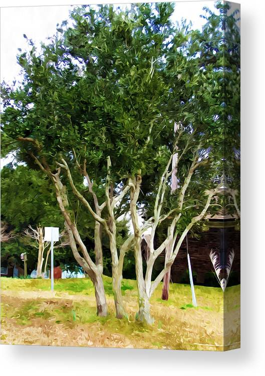 Neighborhood Canvas Print featuring the painting Trees In A Suburban Neighborhood In Summer by Jeelan Clark