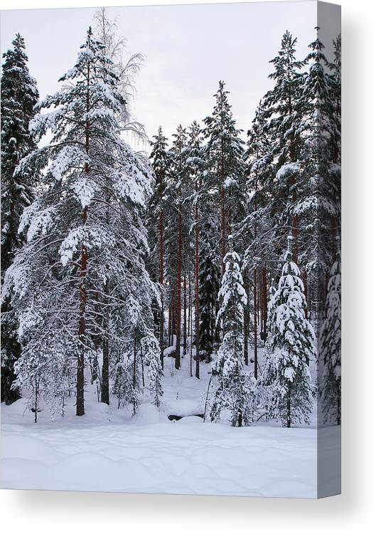 Lehto Canvas Print featuring the photograph Pine Forest Winter by Jouko Lehto