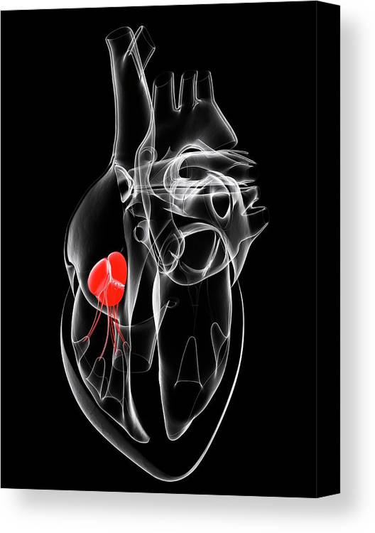 Artwork Canvas Print featuring the photograph Heart Valve by Sciepro/science Photo Library