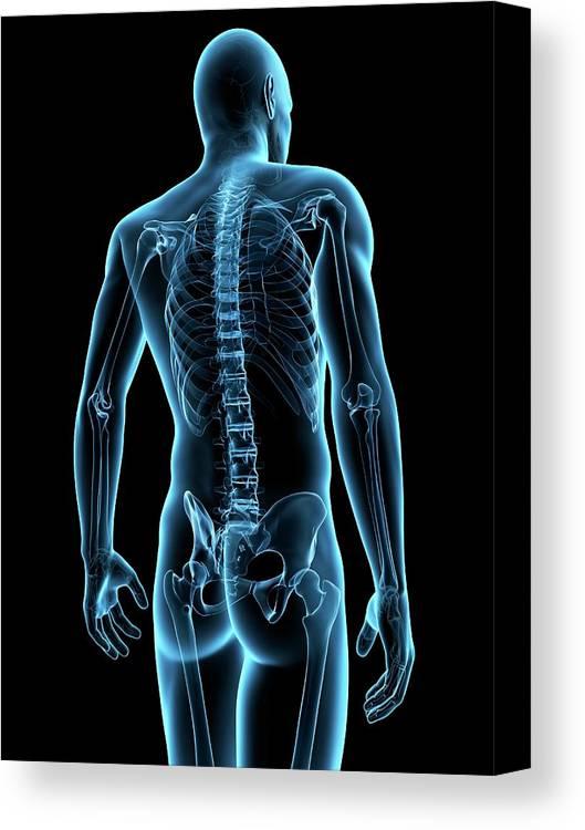 Artwork Canvas Print featuring the photograph Human Spine by Sebastian Kaulitzki