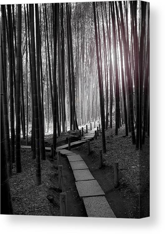 Japan Canvas Print featuring the photograph Bamboo Grove At Dusk by Larry Knipfing