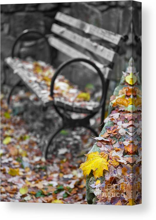 Landscape Canvas Print featuring the photograph Carpet Of Leaves by Don Hall