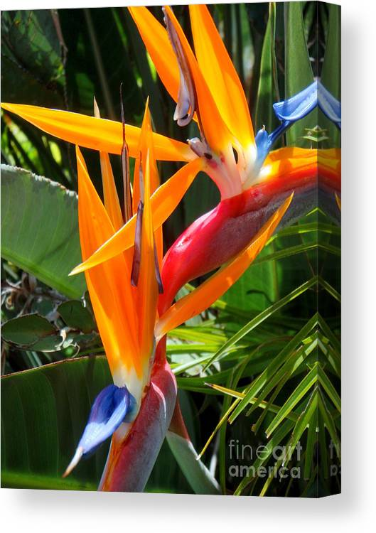 Bird Of Paradise Canvas Print featuring the photograph Double Bird Of Paradise - 2 by Mary Deal