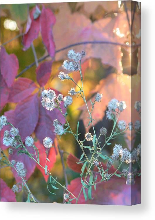 Autumn Canvas Print featuring the photograph Essence by Natalie LaRocque