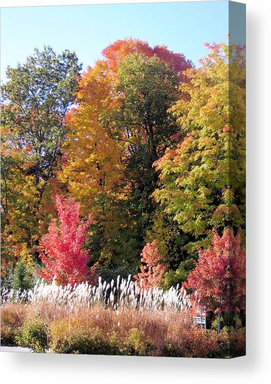 Landscape Canvas Print featuring the photograph Fall Colors by Gaetano Salerno