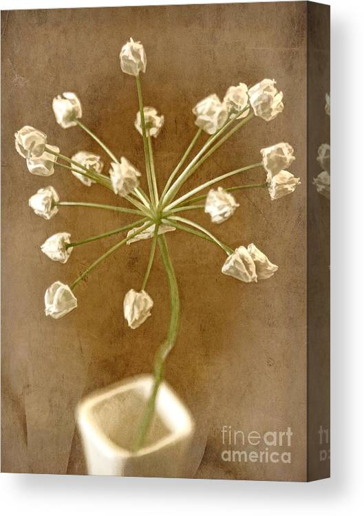 Seed Head Canvas Print featuring the photograph Firecracker by Peggy Hughes