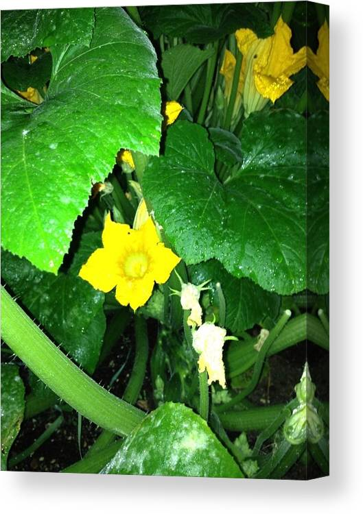 Squash Canvas Print featuring the photograph Green And Yellow by Iris Rivera
