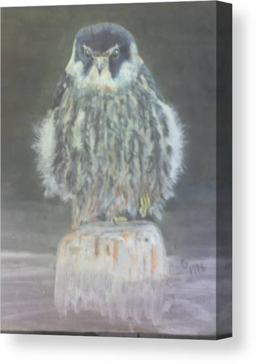 Falcon. Hobby On Post At Rest Canvas Print featuring the painting Hobby by Stephen Thomson