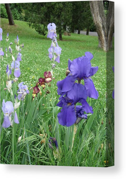 Iris Canvas Print featuring the photograph Iris Entrance by Iris Prints