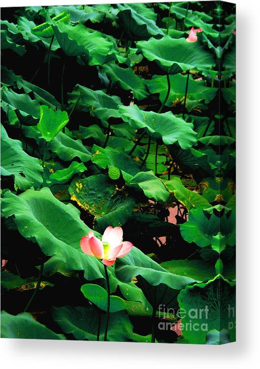 Nature Canvas Print featuring the photograph Lotus by PlusO FineArt