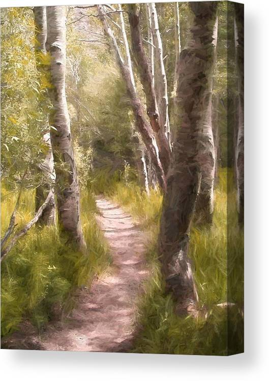 Woods Canvas Print featuring the photograph Path 1 by Pamela Cooper