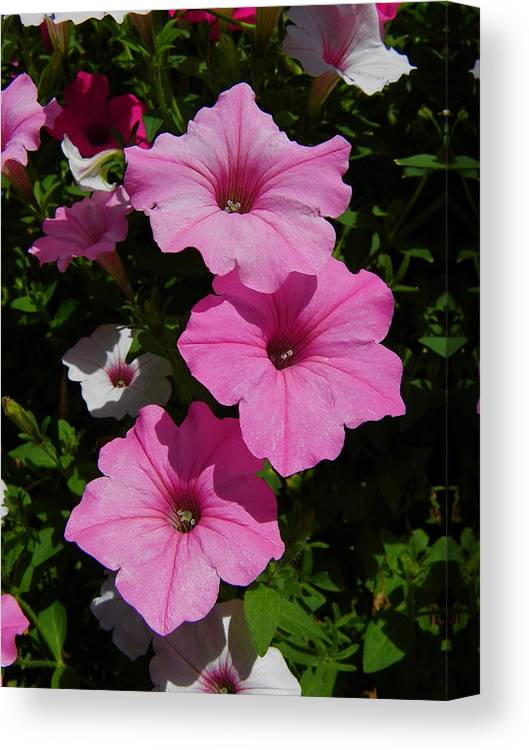 Floral Canvas Print featuring the photograph Perfectly Three by Georgia Hamlin