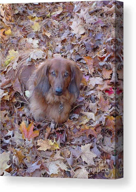 Dog Canvas Print featuring the photograph Puppy by Nancie Johnson