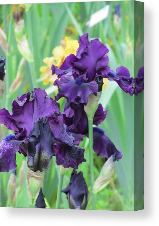 Iris Canvas Print featuring the photograph Titan's Glory Iris by Iris Prints