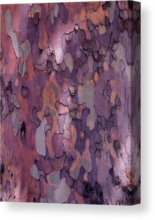 Abstract Canvas Print featuring the photograph Tree Abstract by Rona Black