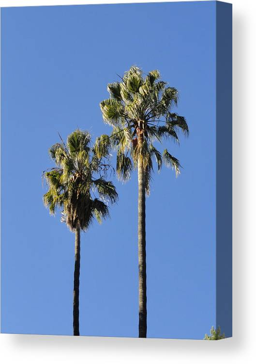 Palm Tree Canvas Print featuring the photograph Twin Palms by Shannon Grissom