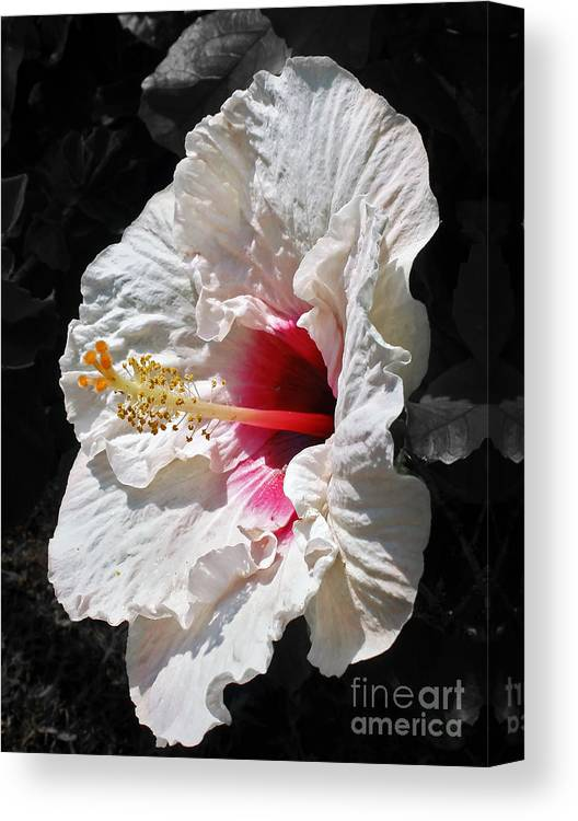 Photography Canvas Print featuring the photograph White Hibiscus by Kaye Menner