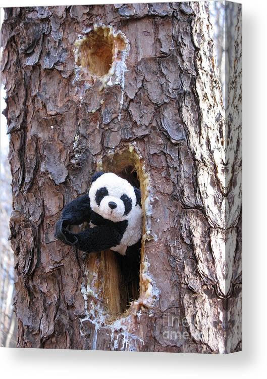 Panda Baby Canvas Print featuring the photograph Hiding by Ausra Huntington nee Paulauskaite