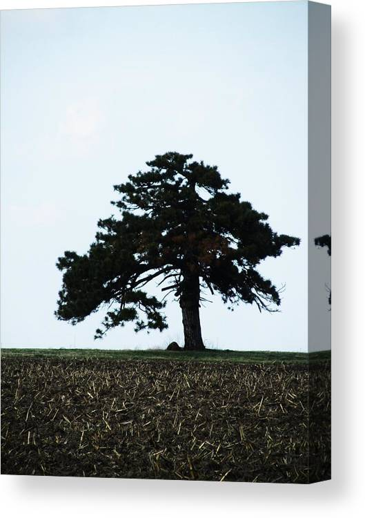 Single Tree Canvas Print featuring the photograph Lonely Tree #1 by Todd Sherlock