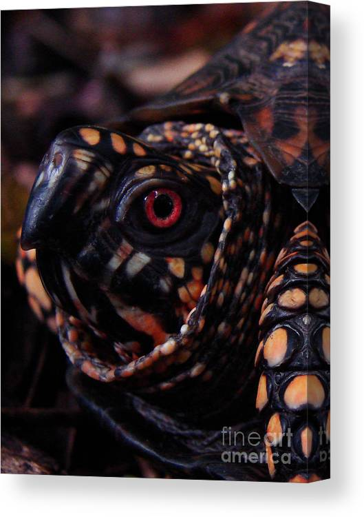Turtle Canvas Print featuring the photograph Red Eye by Mark Holbrook