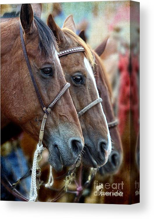 Rodeo Canvas Print featuring the photograph Three by Karen White