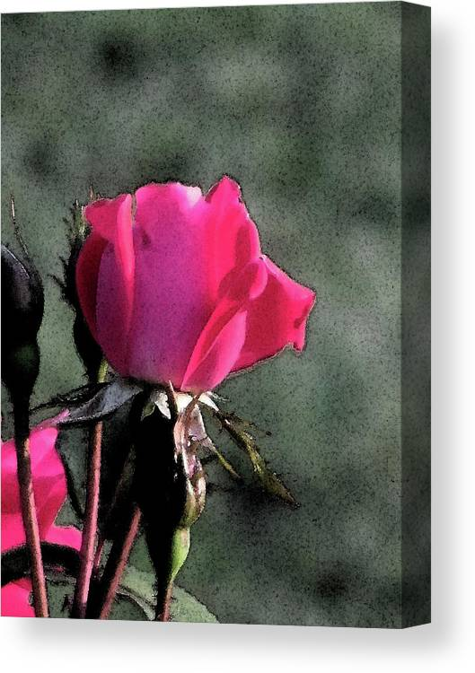 Flowers Canvas Print featuring the digital art Rosebud by Michele Caporaso
