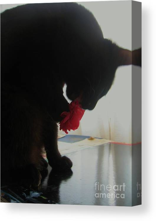 Photograph Cat Black Red Flower Camellia Canvas Print featuring the photograph Cat Eating Camellia by Seon-Jeong Kim