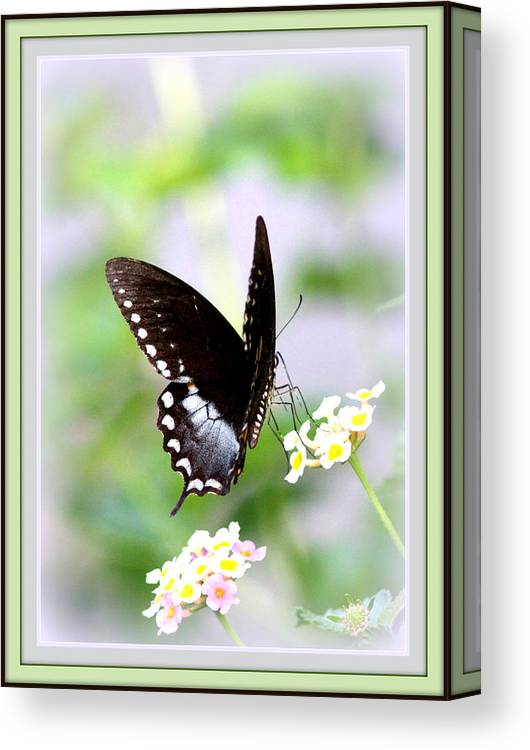 5276-001 Canvas Print featuring the photograph 5276-001- Butterfly - Swallowtail by Travis Truelove