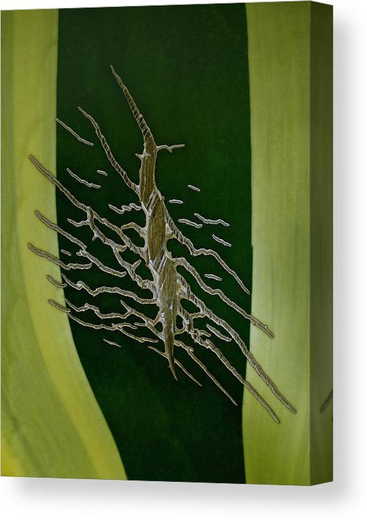 Nature Canvas Print featuring the photograph Agave Tattoo by Murray Bloom