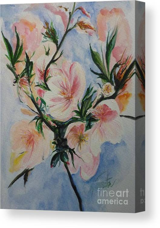 Flowers Canvas Print featuring the painting Almond Blossom by Lizzy Forrester