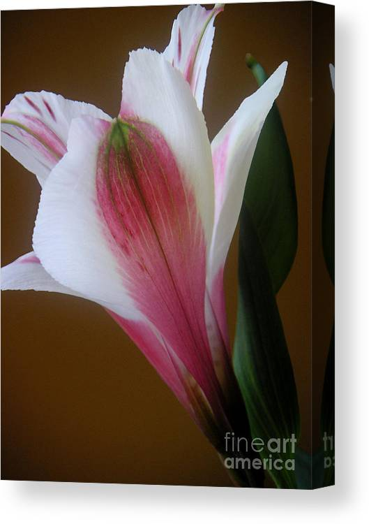 Nature Canvas Print featuring the photograph Alstroemeria - Alone by Lucyna A M Green