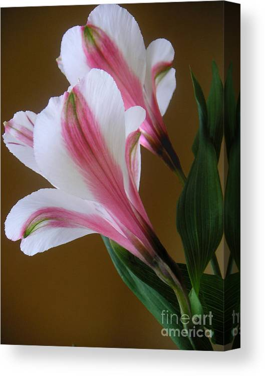 Nature Canvas Print featuring the photograph Alstroemerias - Together by Lucyna A M Green