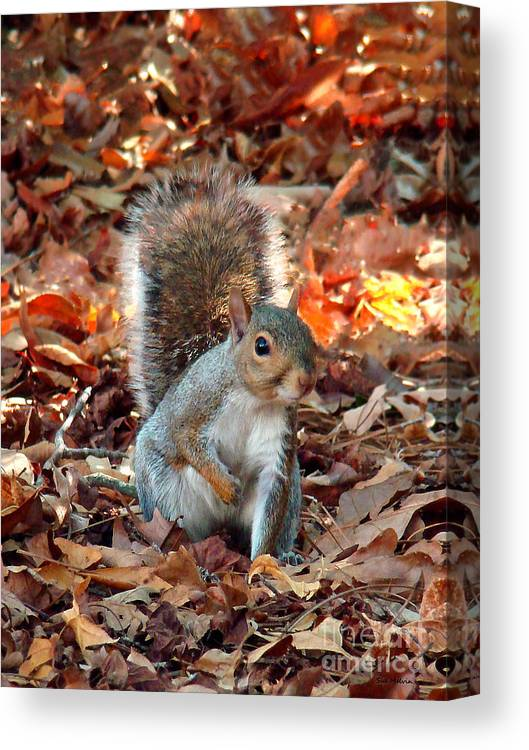 Squirrel Canvas Print featuring the photograph Are You Friendly by Sue Melvin