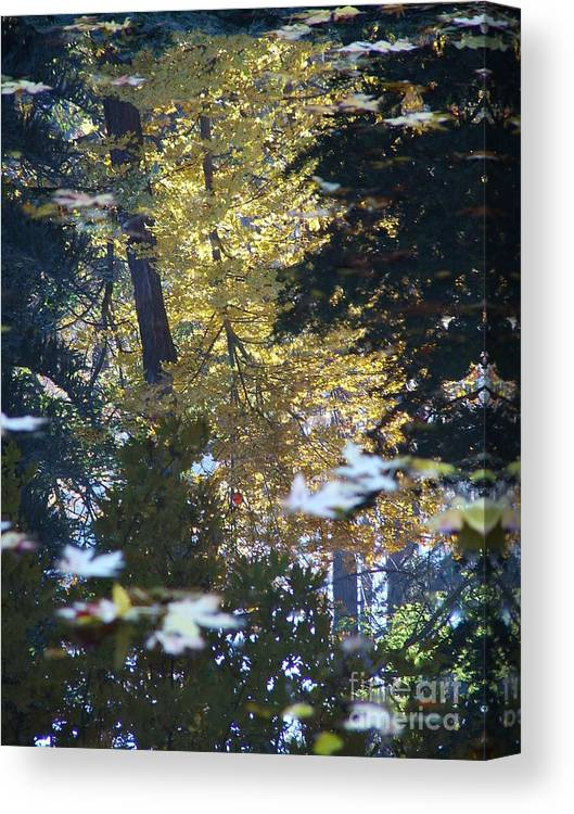Nature Canvas Print featuring the photograph Ashland Reflections by John Loyd Rushing
