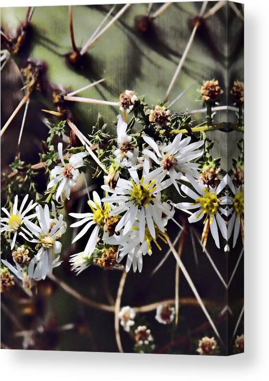 Cactus Canvas Print featuring the photograph Cactus Flowers by Scott Wyatt