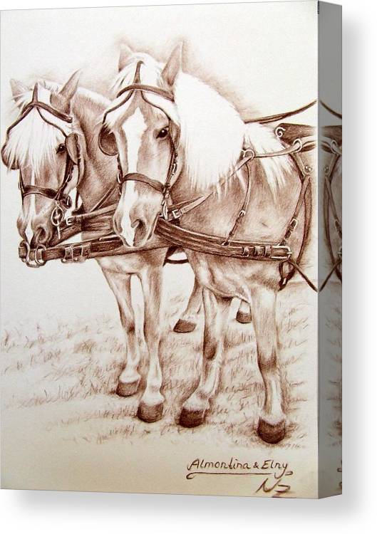 Horses Canvas Print featuring the drawing Coach Horses by Nicole Zeug