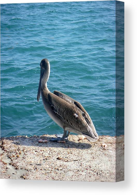 Nature Canvas Print featuring the photograph Creatures Of The Gulf - Lulled By The Waves by Lucyna A M Green