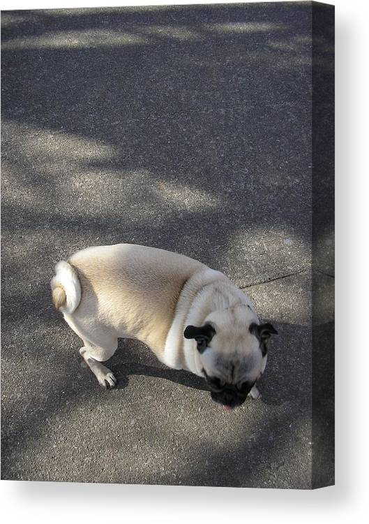Dog Canvas Print featuring the photograph Curtail by Christina Gardner