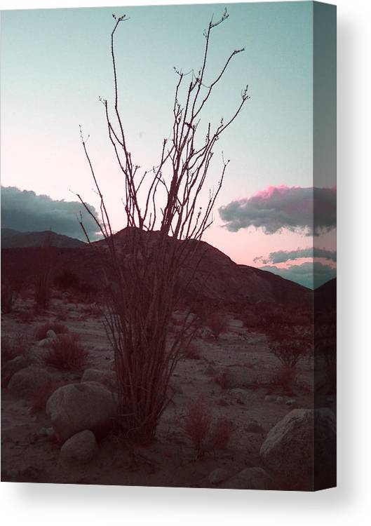 Canvas Print featuring the photograph Desert Plant And Sunset by Naxart Studio