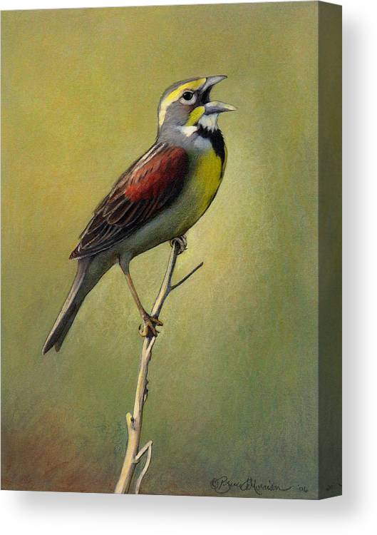Birds Canvas Print featuring the drawing Dickcissel Summer Song by Bruce Morrison