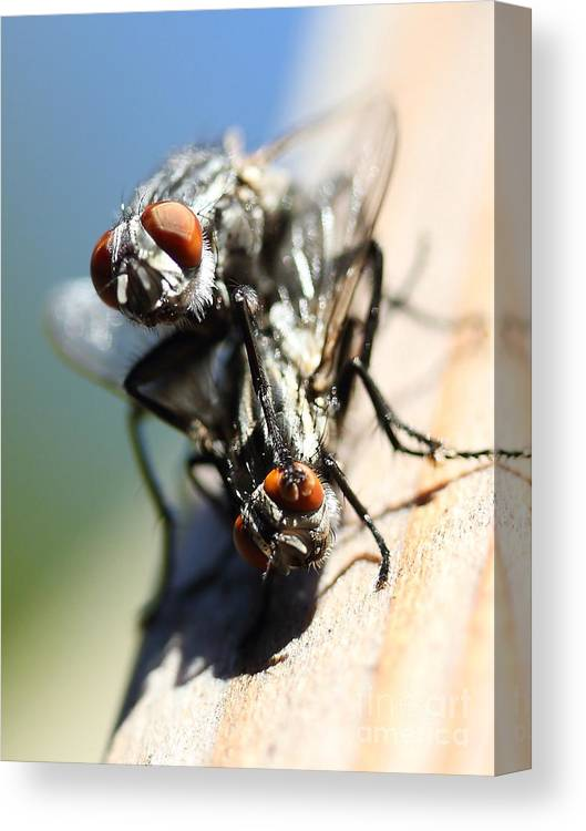 Macro Canvas Print featuring the photograph Entomologists Discover Why People Want To Be A Fly On The Wall by Wingsdomain Art and Photography