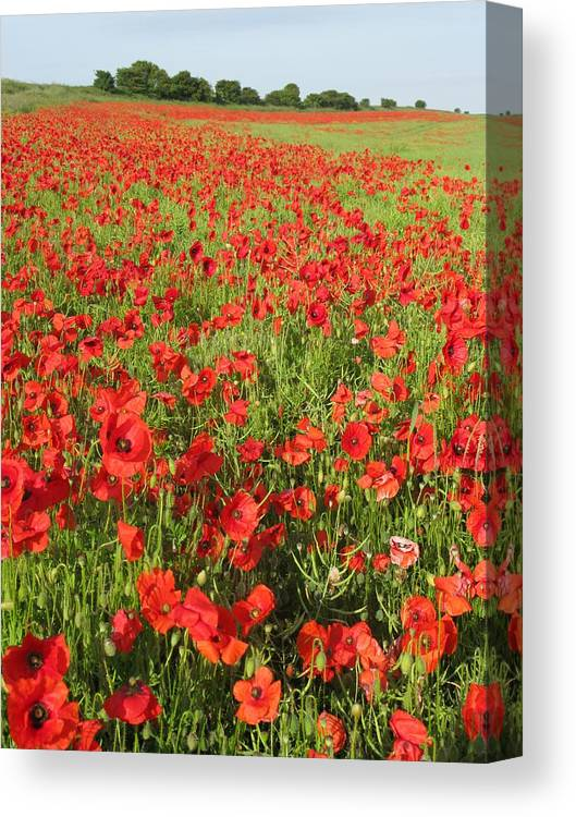 Flanders Field Canvas Print featuring the photograph Flanders Field by Maria Joy