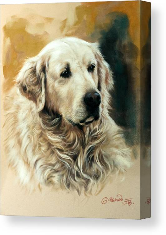 Labrador Canvas Print featuring the drawing Golden Retriever by Gerard Mineo