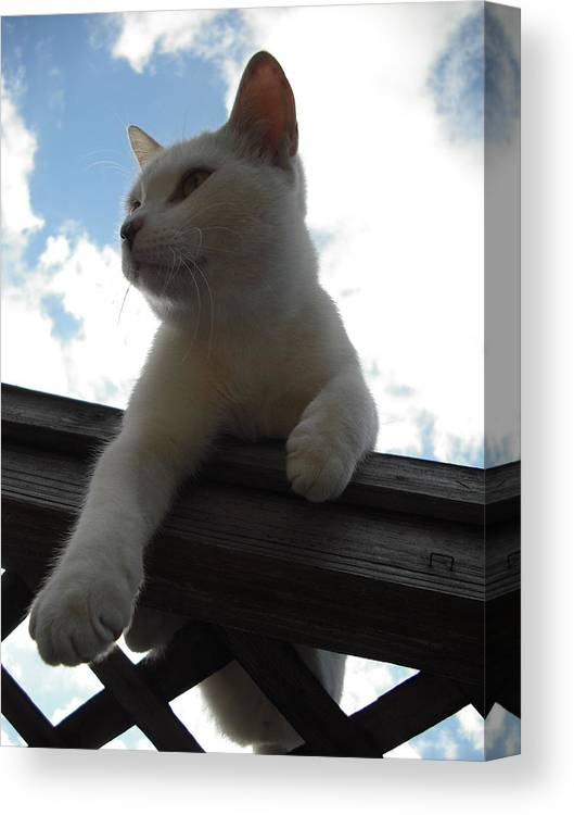 Cat Canvas Print featuring the photograph Goodbye Blue Sky by Mandy Shupp