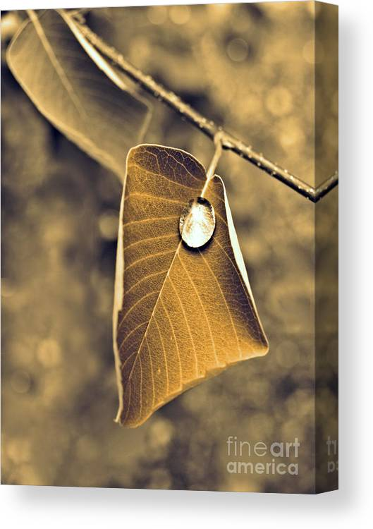 Leaf Canvas Print featuring the photograph June 18 2010 by Tara Turner